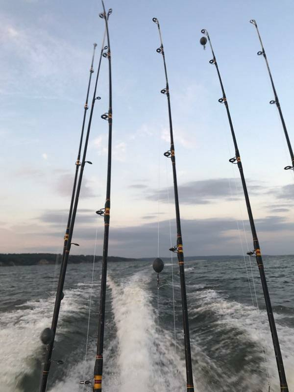 Lake Texoma Striper Fishing Report, Lake Texoma Striper Fishing, Captain Steve Blakley
