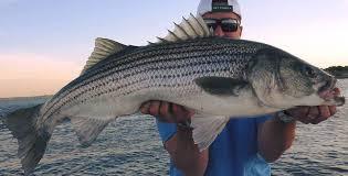 Lake Texoma Winter Striper Fishing, Lake Texoma Striper Fishing, Captain Steve Blakley
