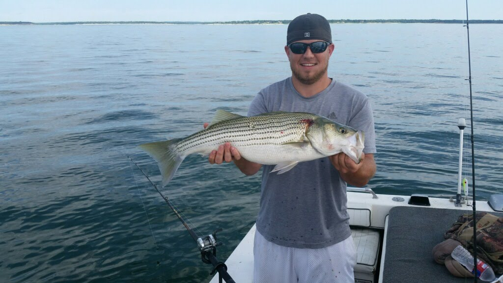 Pictures of Striped Bass, how to catch striper